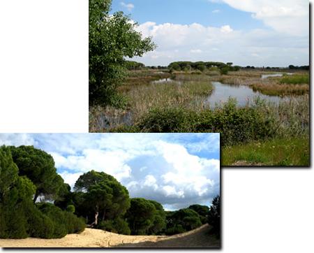 Doñana reservas. Visitas Guiadas 4