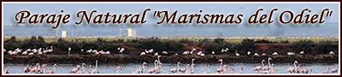 Paraje Natural Marismas del Odiel Huelva