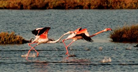 Doñana reservas. Visitas Guiadas 5